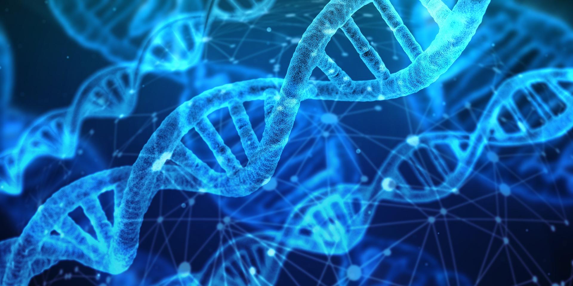Genetica: CNV, een nieuw stuk in de genetische puzzel?