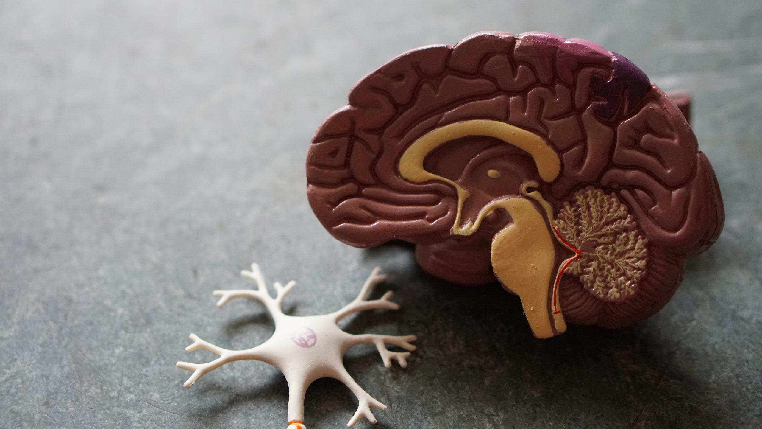 Geen schadelijke lange termijn effect ADHD medicatie op het brein