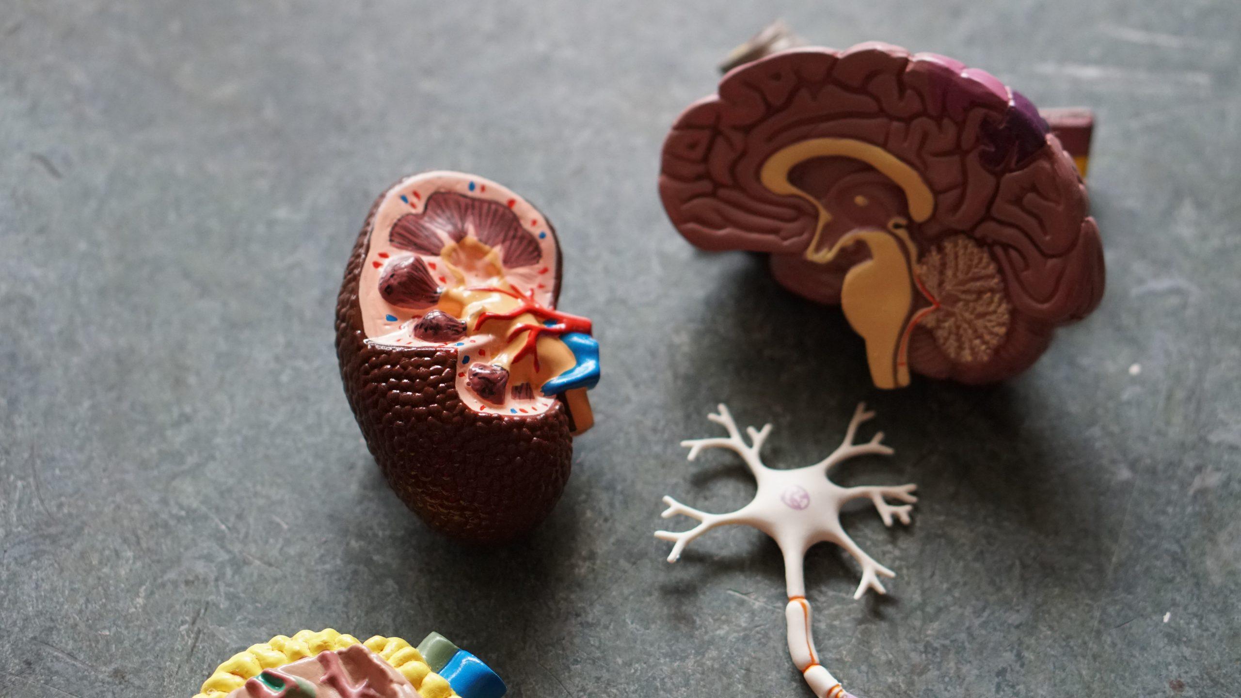 Beter brein met psychostimulantia